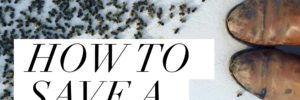 HOW TO SAVE A POISONED BEEHIVE