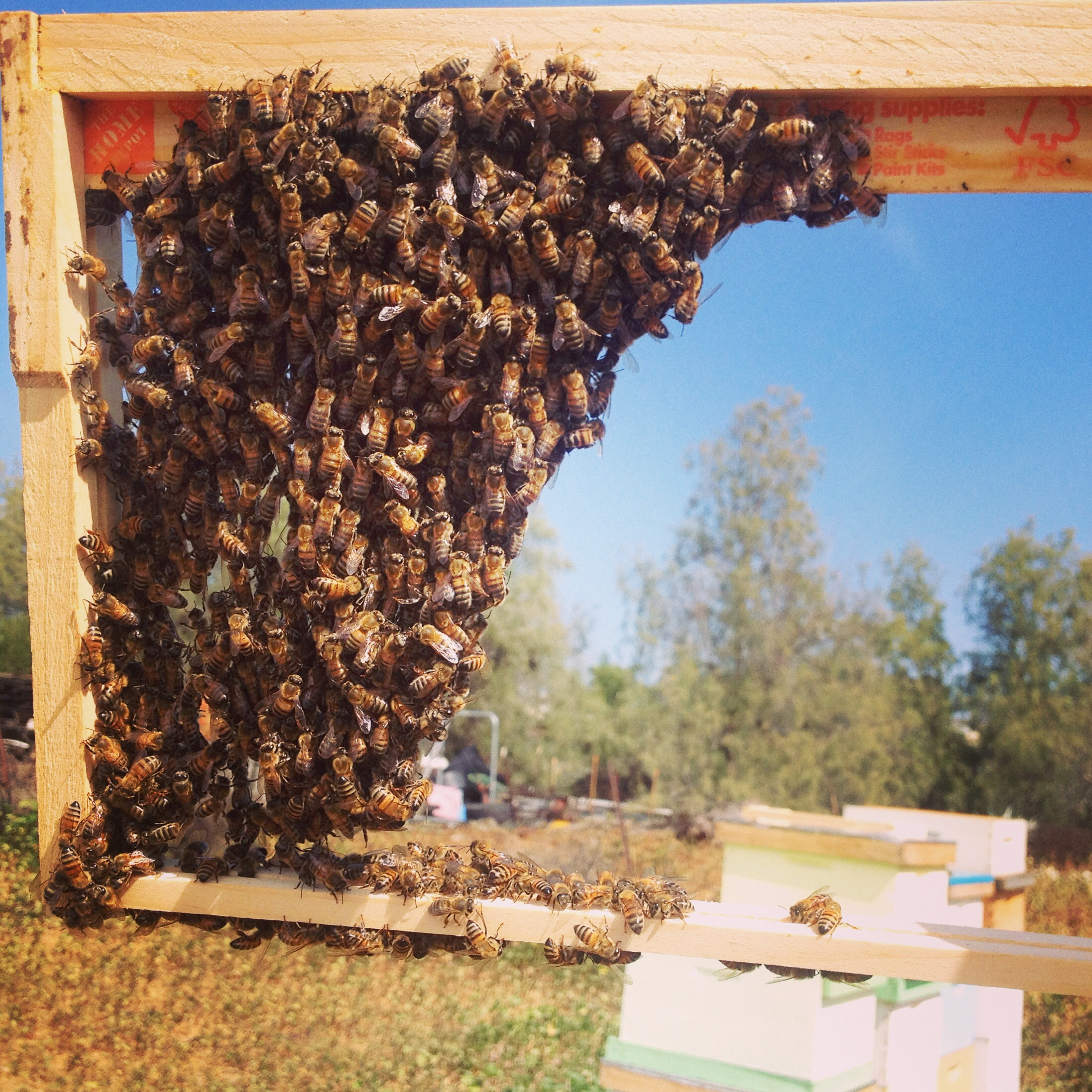 beekeeping like a langstroth vs top bar hive