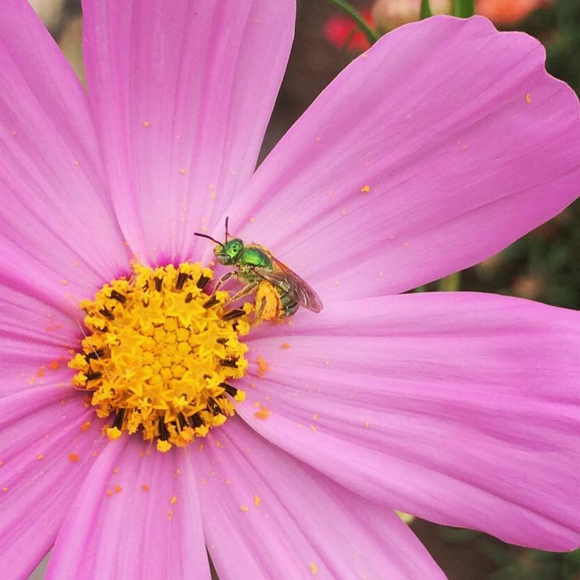 TOP 10 BEE-FRIENDLY FLOWERS