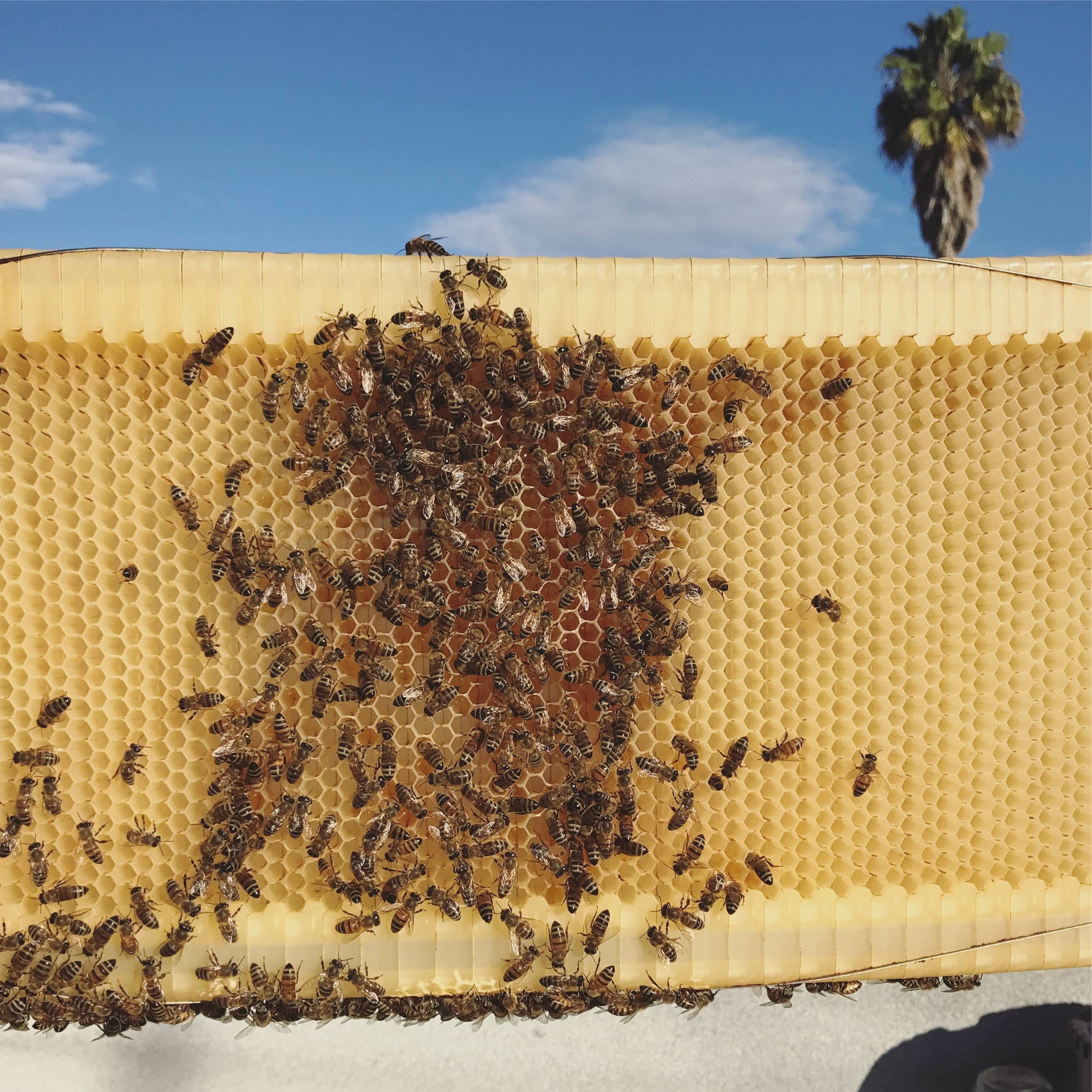 IS THE FLOW HIVE BAD FOR BEES?
