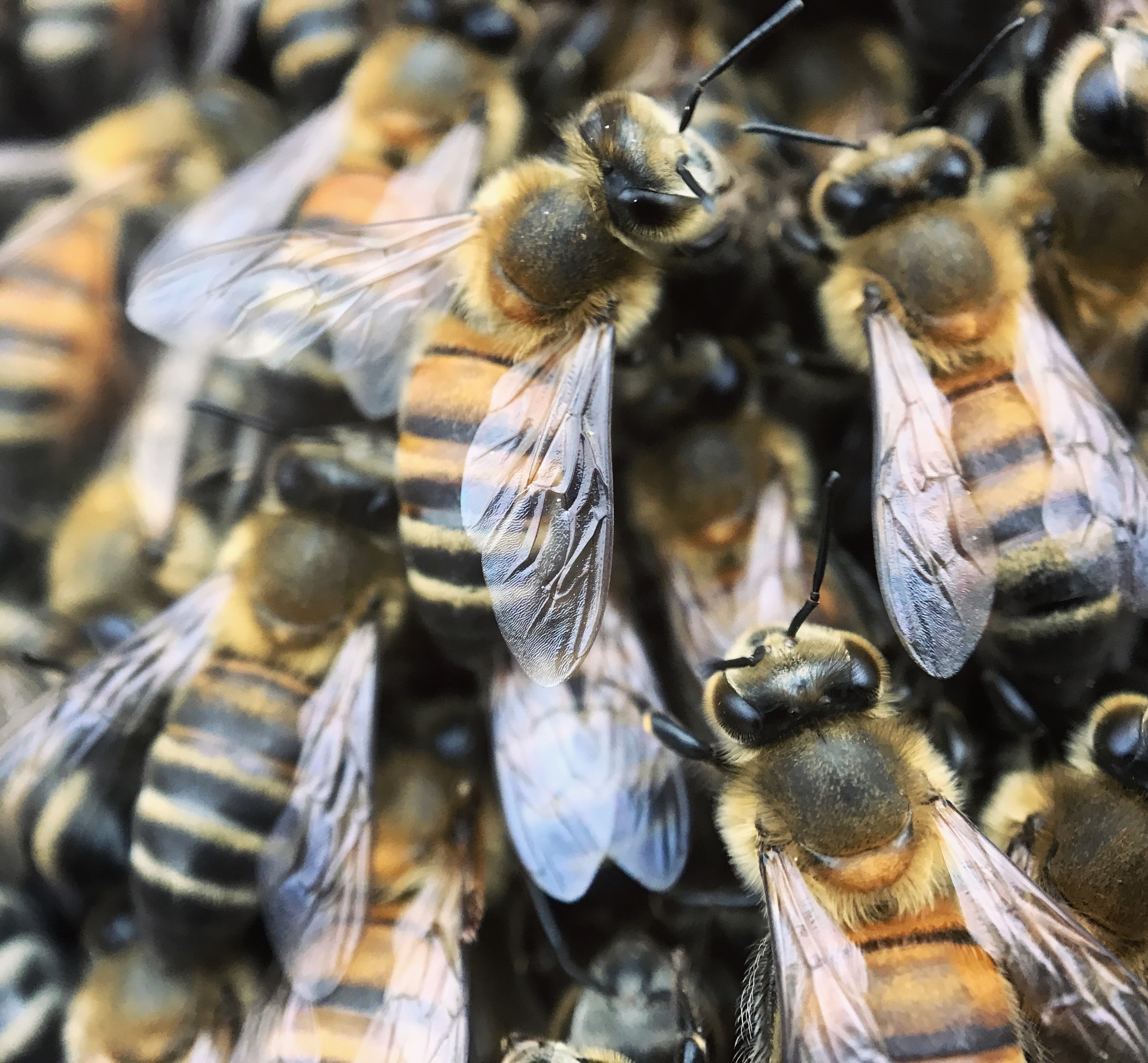 Why the Bees Are Dying