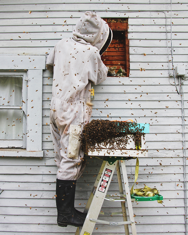 Why do beekeepers charge for live bee removal?