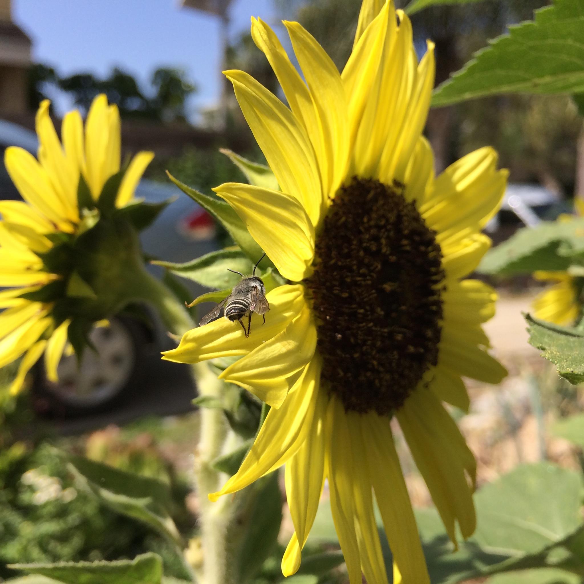 Beekeeping Like A Girl Top 10 Bee Friendly Flowers
