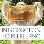 Online Intro to Beekeeping Class