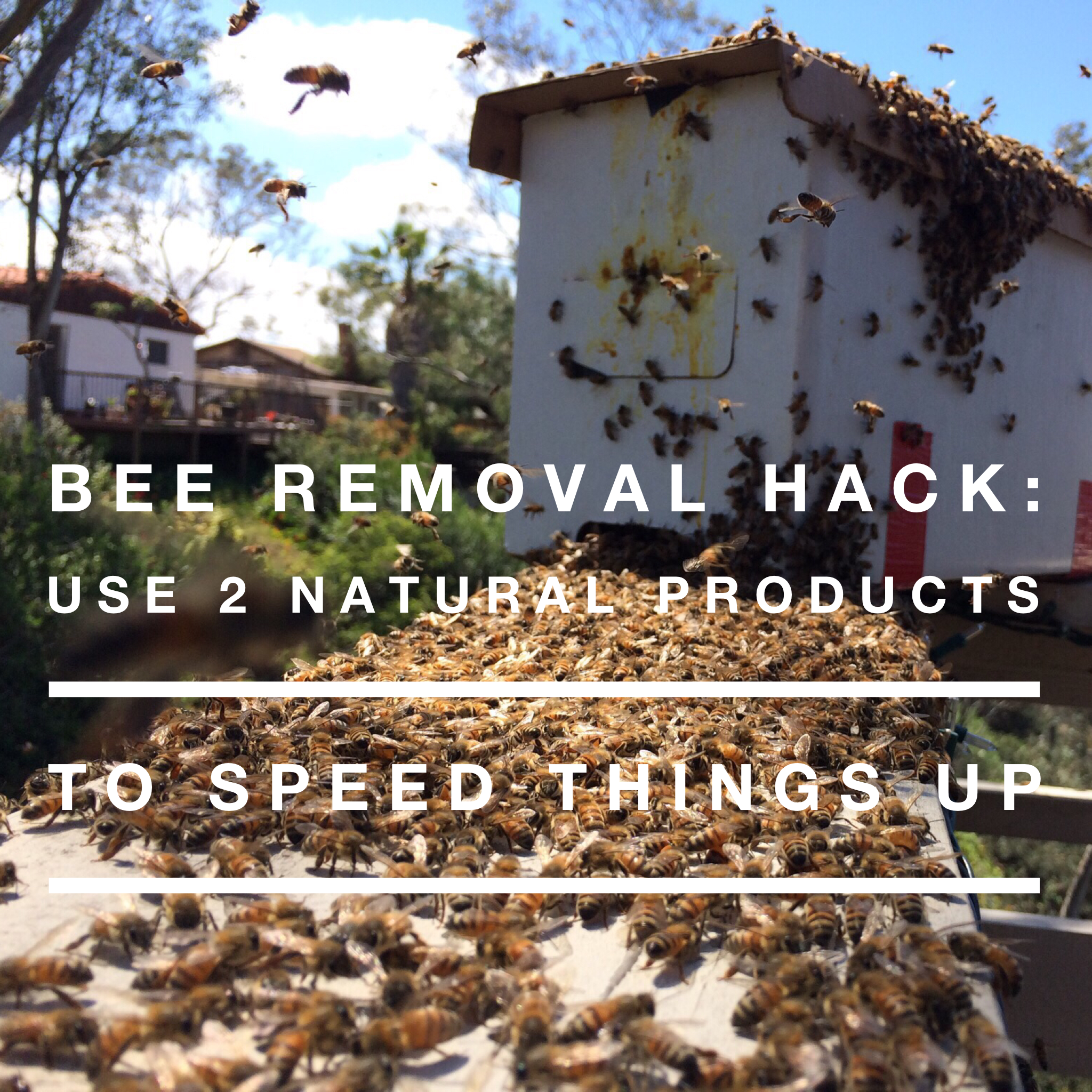 Beekeeping Lifehack: 2 Natural Products for Bee Removals