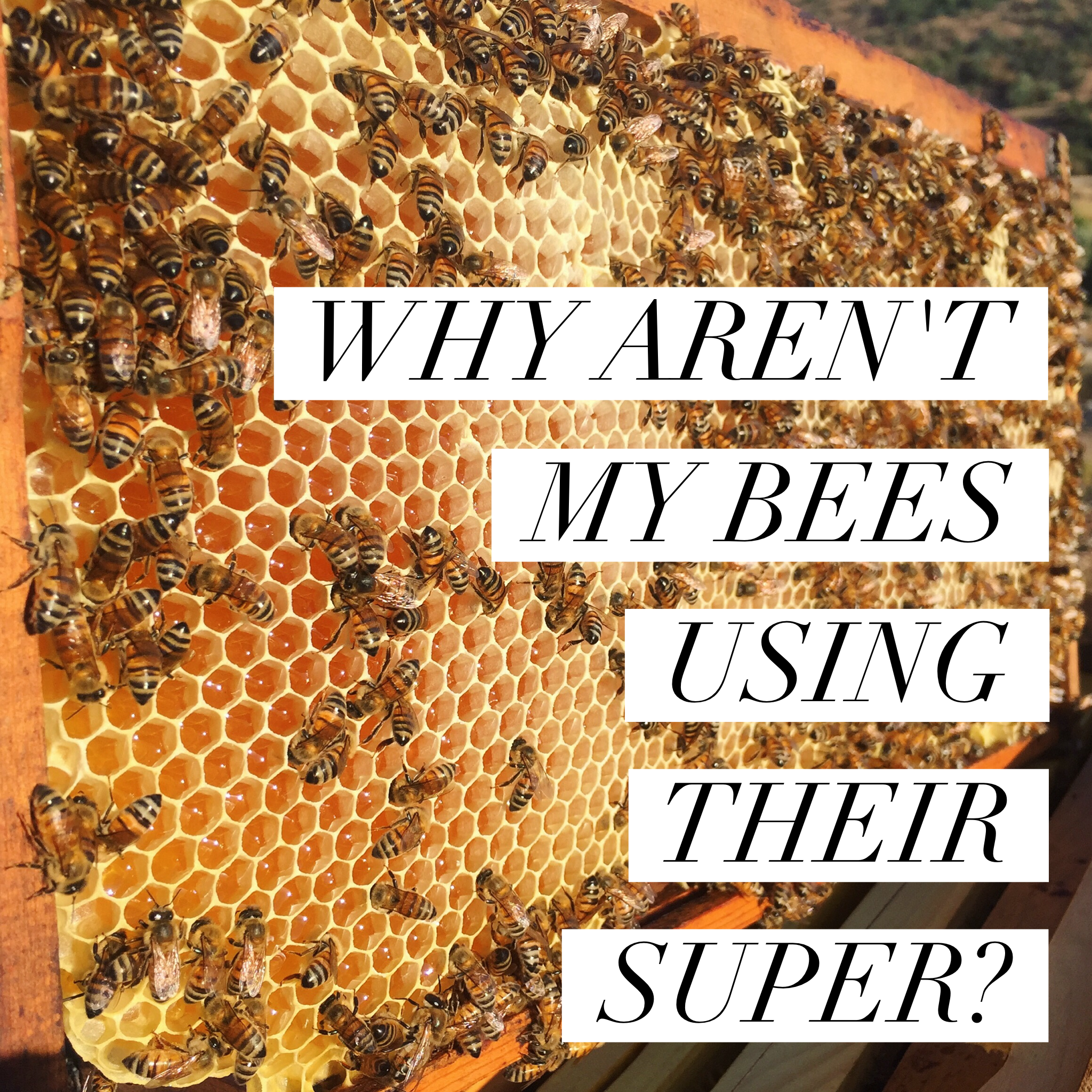 why aren't my bees filling their super?
