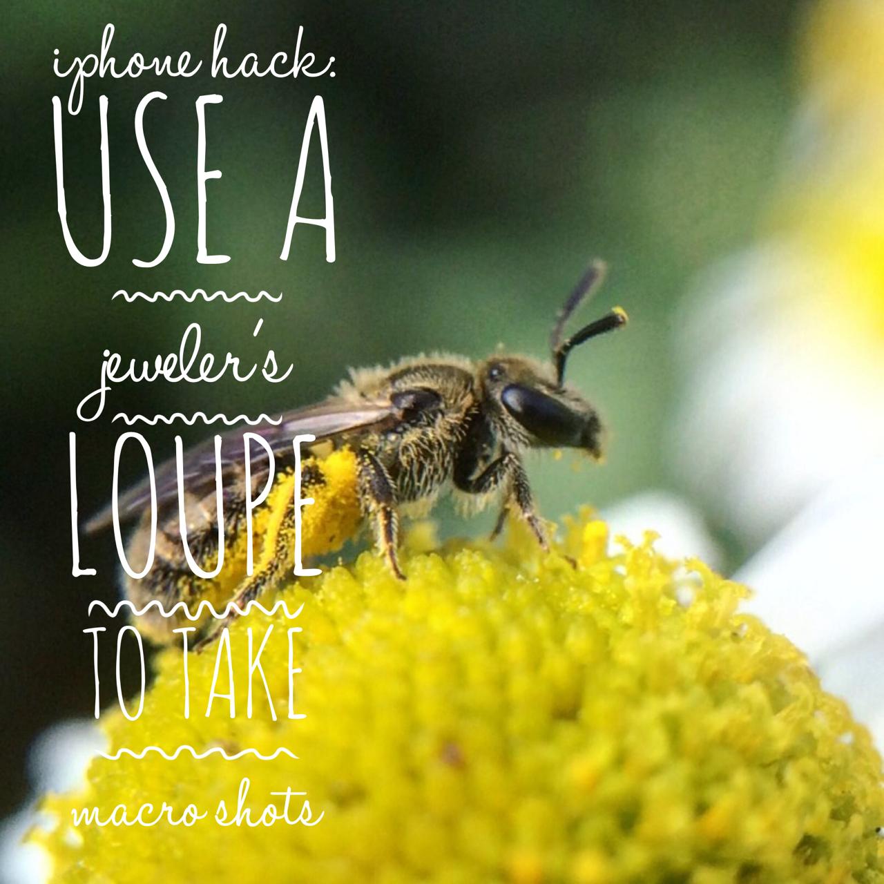 Beekeeping Lifehack: iPhone Photography Trick
