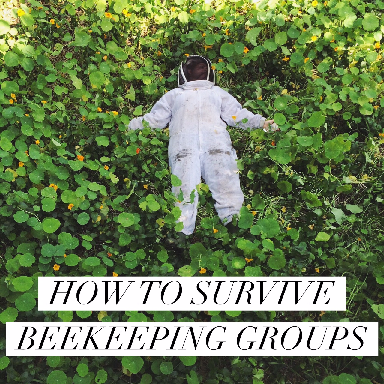 HOW TO SURVIVE BEEKEEPING GROUPS