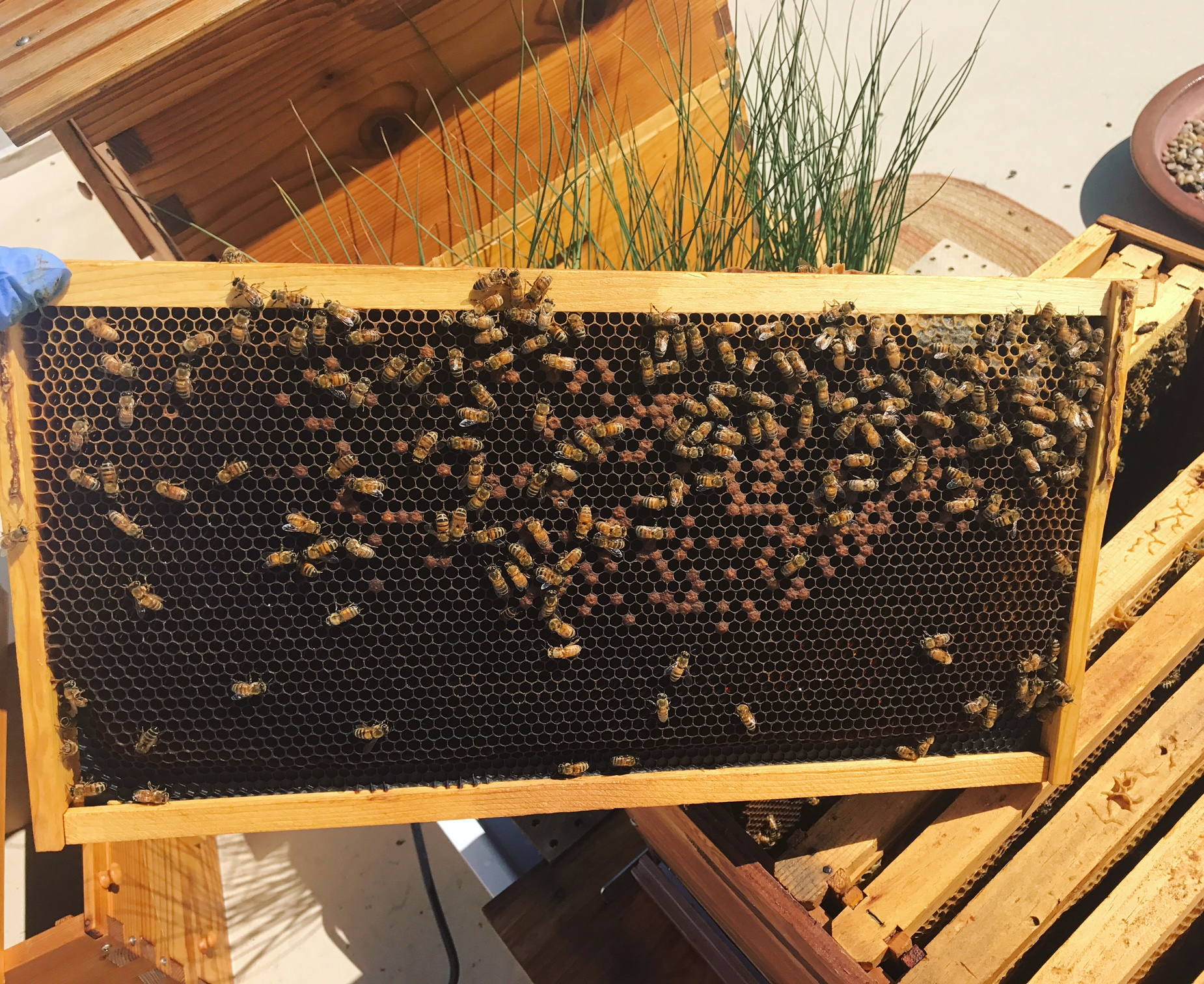 5 WAYS TO HELP A FAILING HIVE - Beekeeping Like A Girl