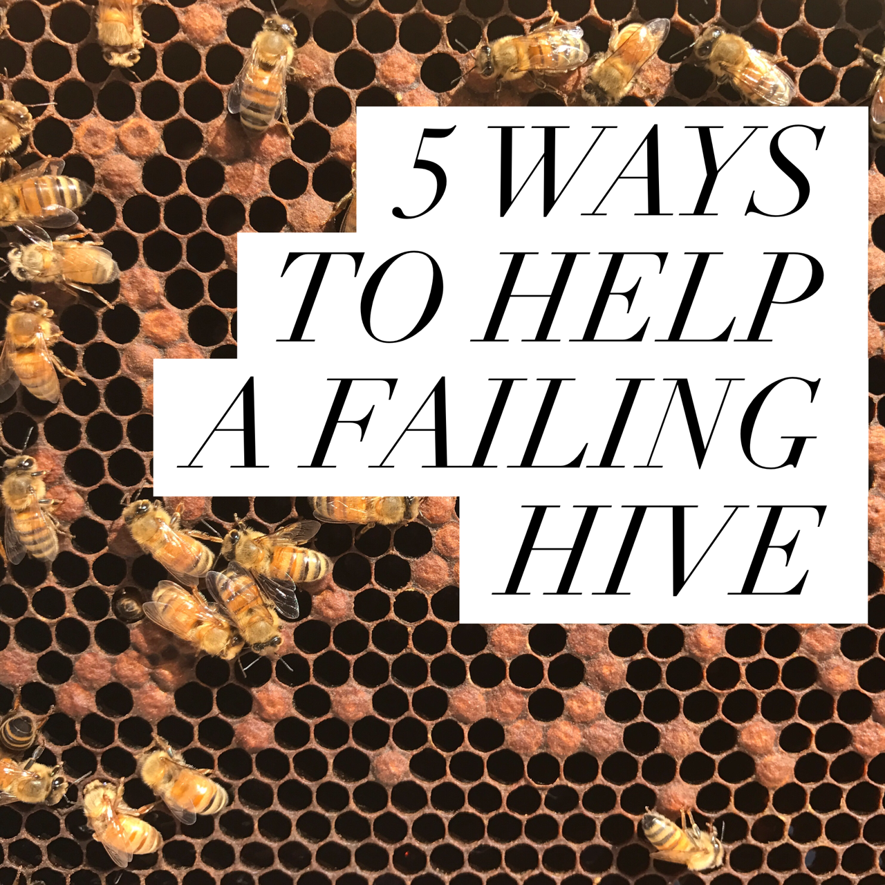 5 WAYS TO SAVE A FAILING HIVE