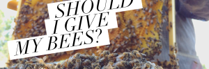 How much space should I give my bees?