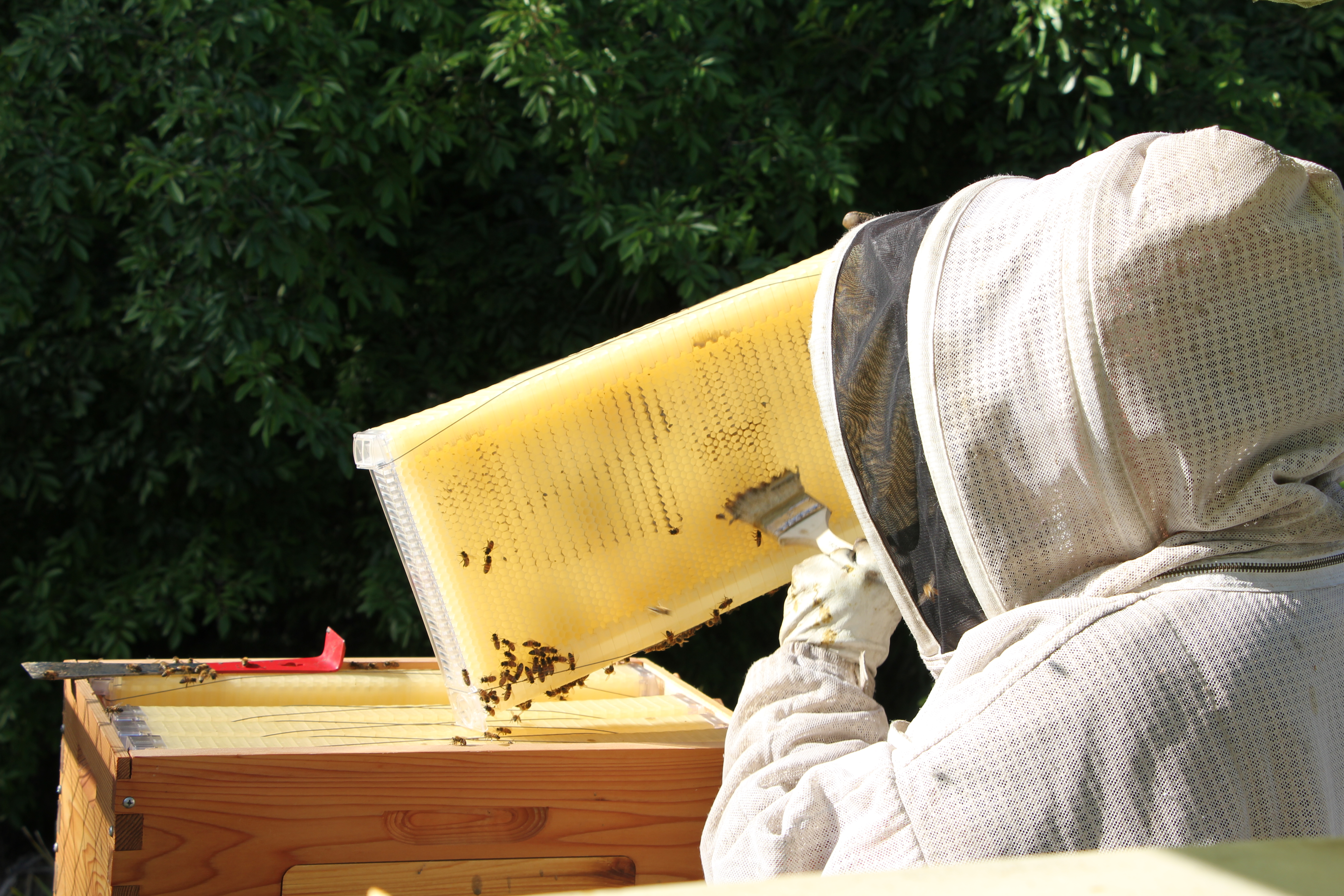 HOW TO GET BEES TO USE YOUR FLOW HIVE