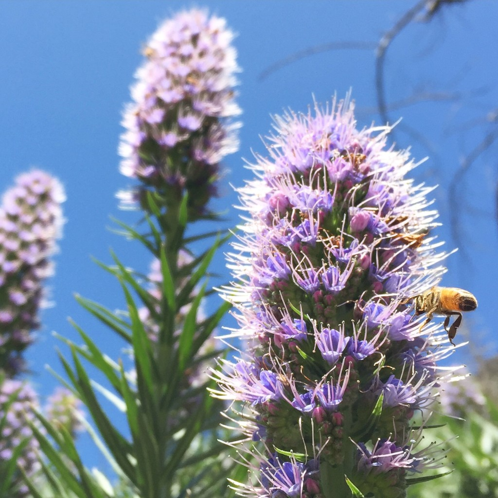 beekeeping like a top 10 bee friendly flowers