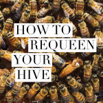 how to requeen your hive
