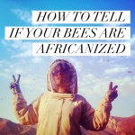 HOW TO TELL IF YOUR BEES ARE AFRICANIZED