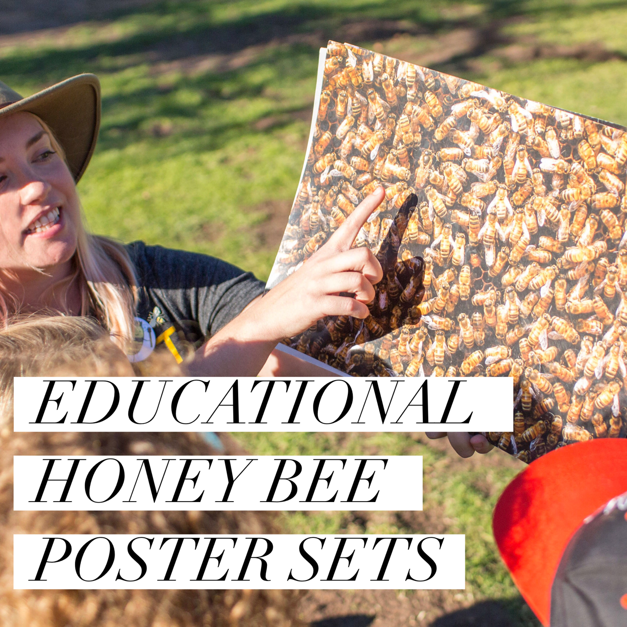 Honey Bee Teaching Posters