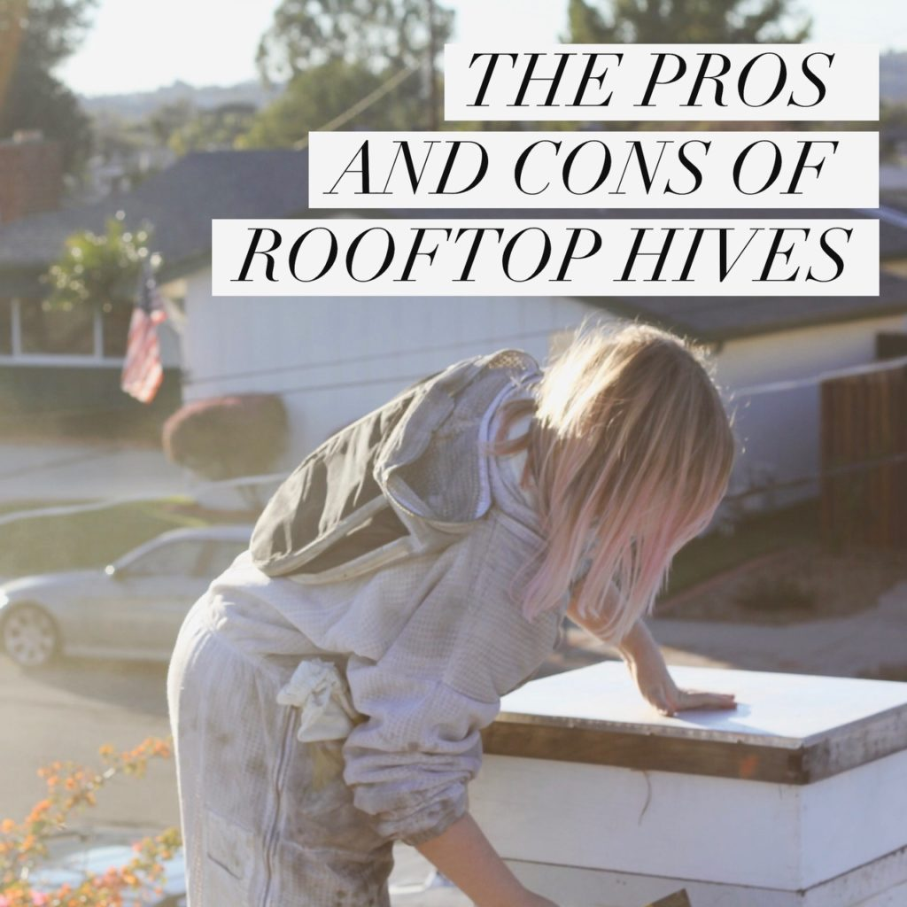 THE PROS AND CONS OF ROOFTOP HIVES