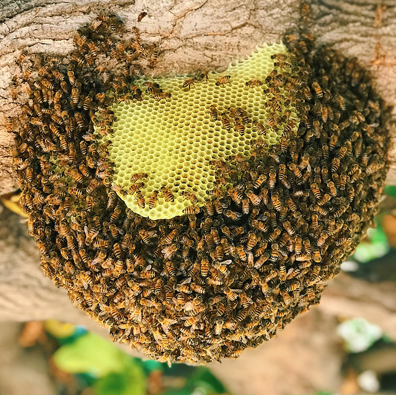 Why Do Beekeepers Charge for Bee Removal?