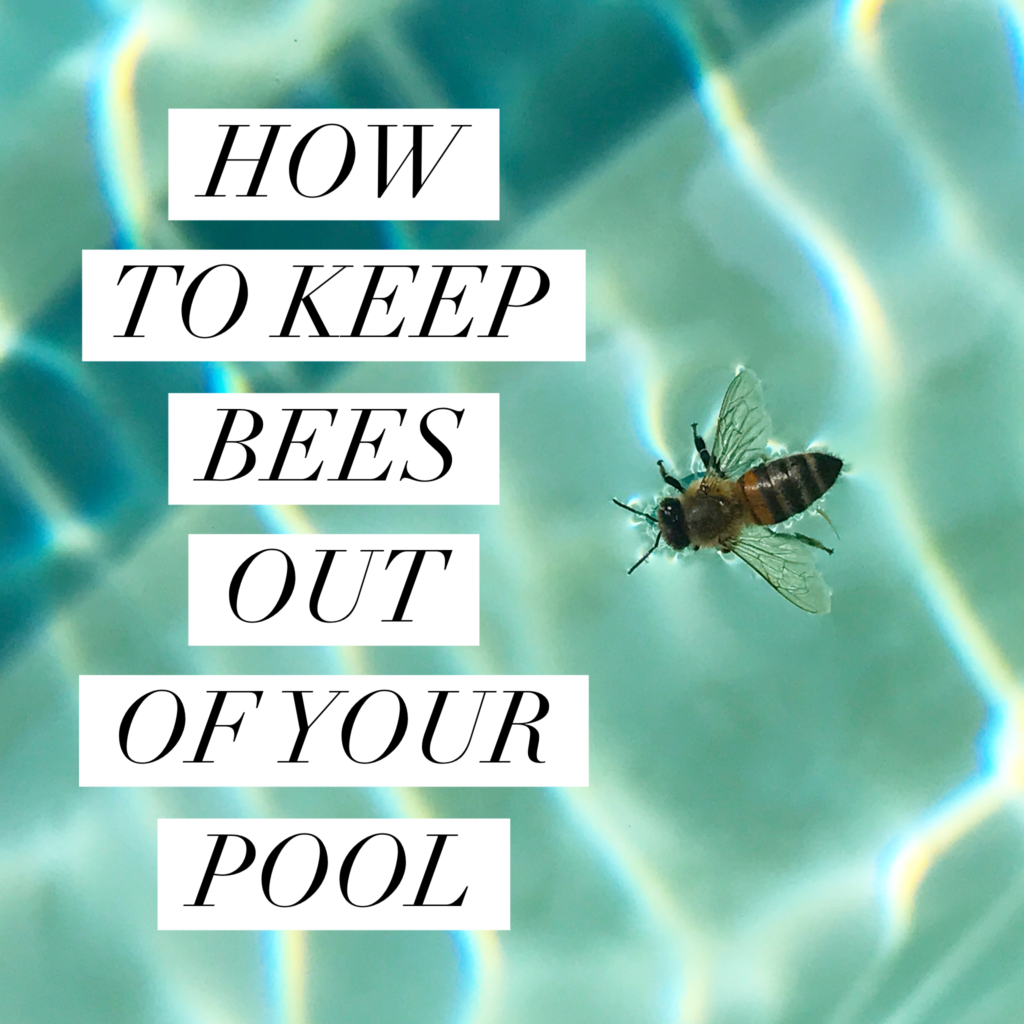 how to keep bees out of your pool