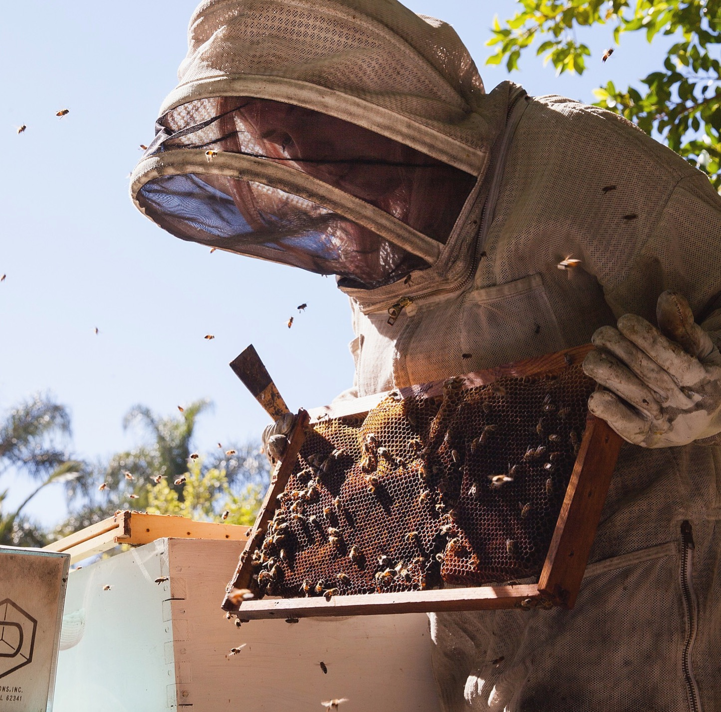 beekeeping like a how to keep bees calm