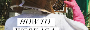 How to work as a full-time beekeeper
