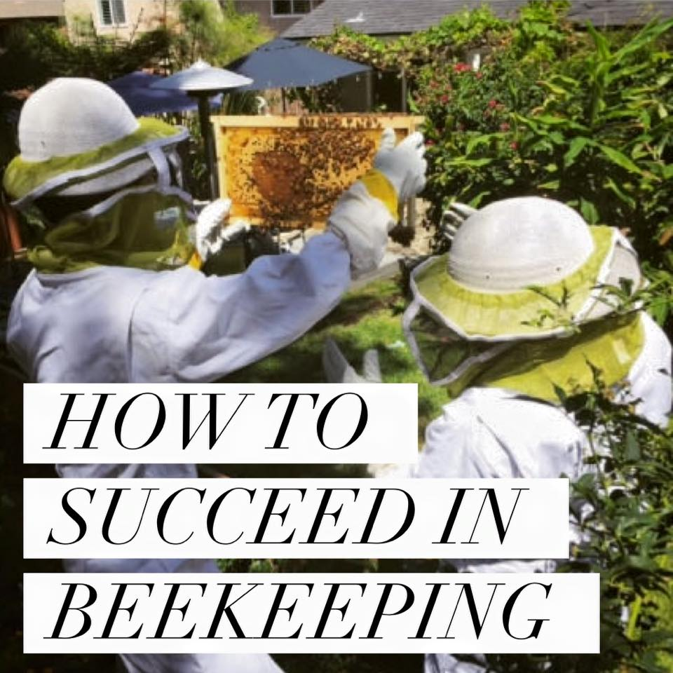 Beekeeping like a girl 6 things you didnt know about queen bees 12348086101020740301488187761407292226377468n biocorpaavc