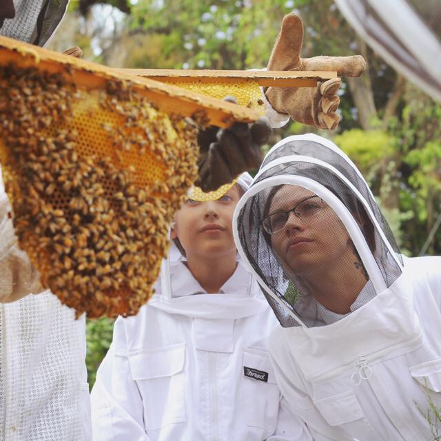 Beekeeping Like A Girl