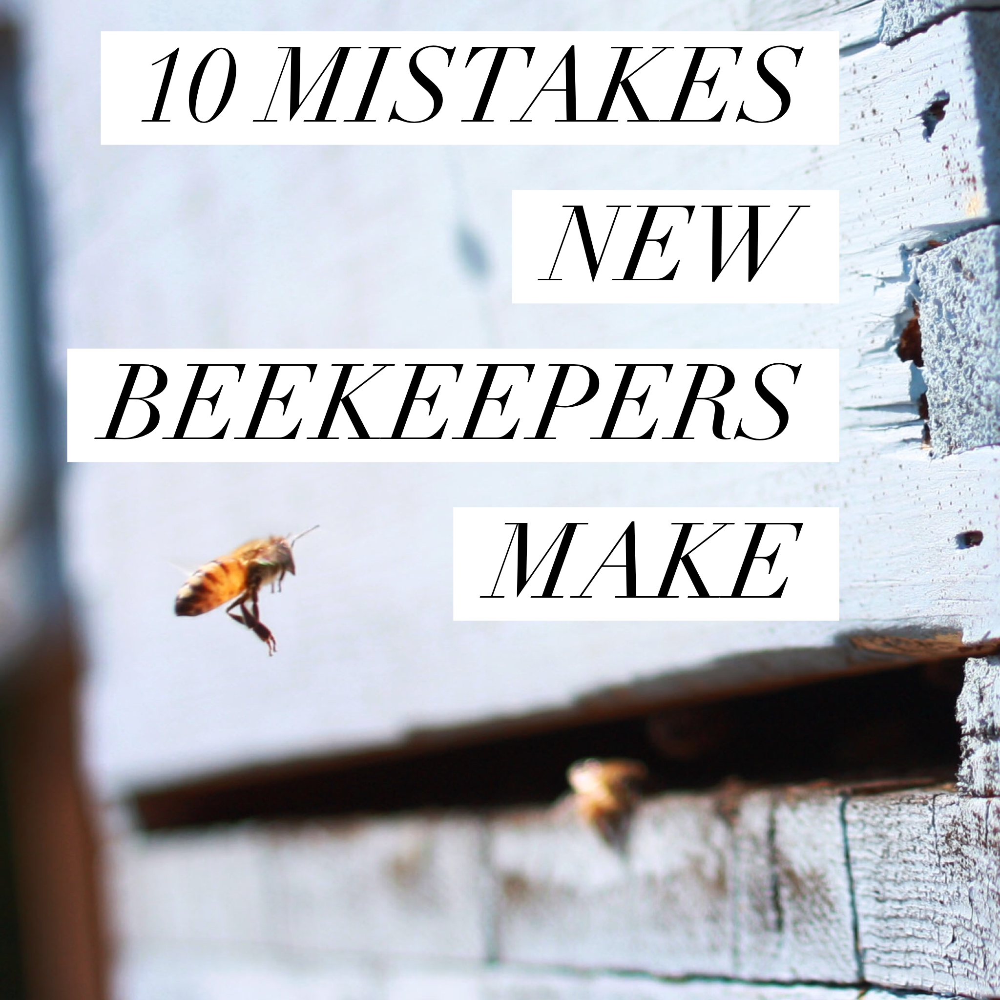 10 MISTAKES NEW BEEKEEPERS MAKE - Beekeeping Like A Girl