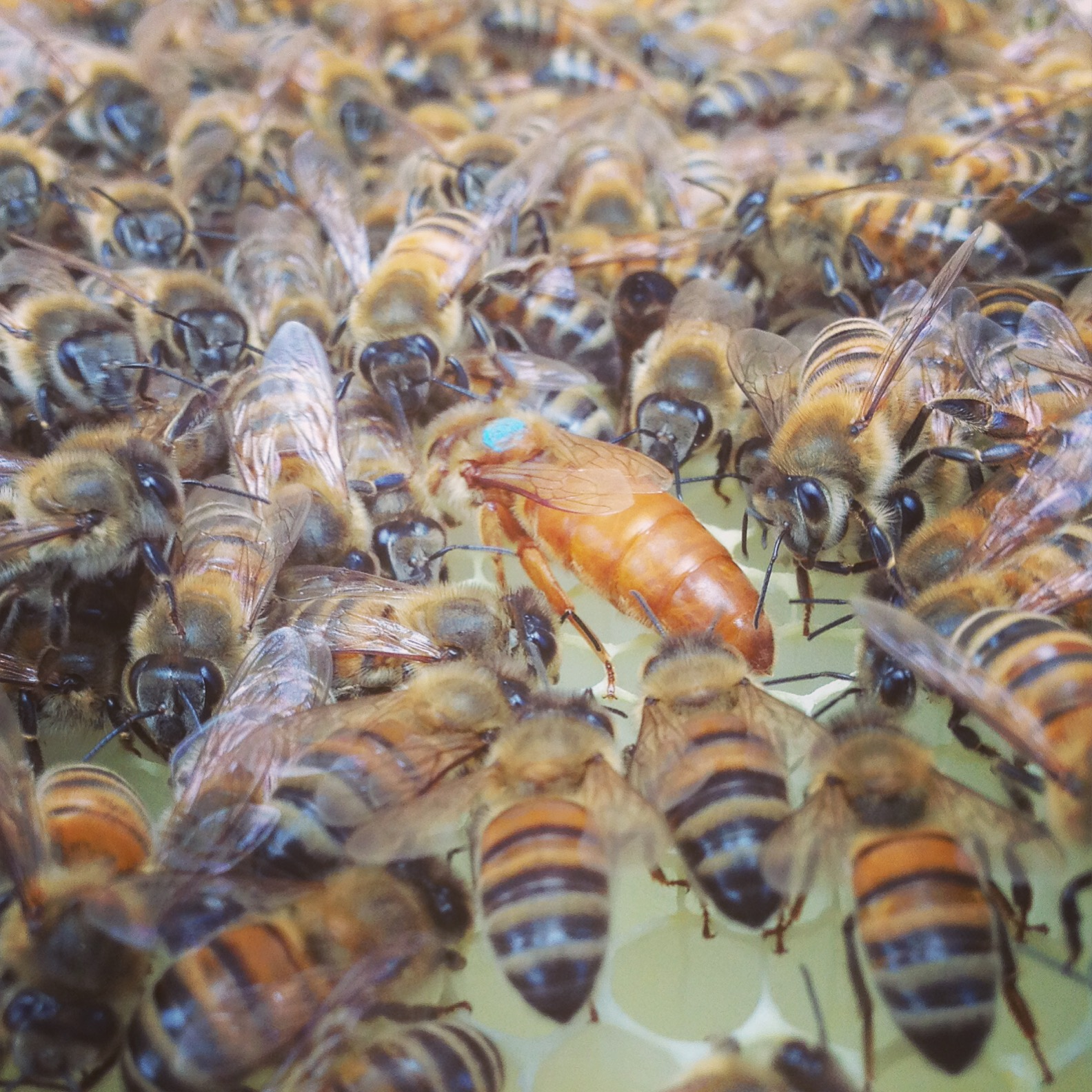2018 Second Edition Beekeeping Raising Honeybees Without Chemicals