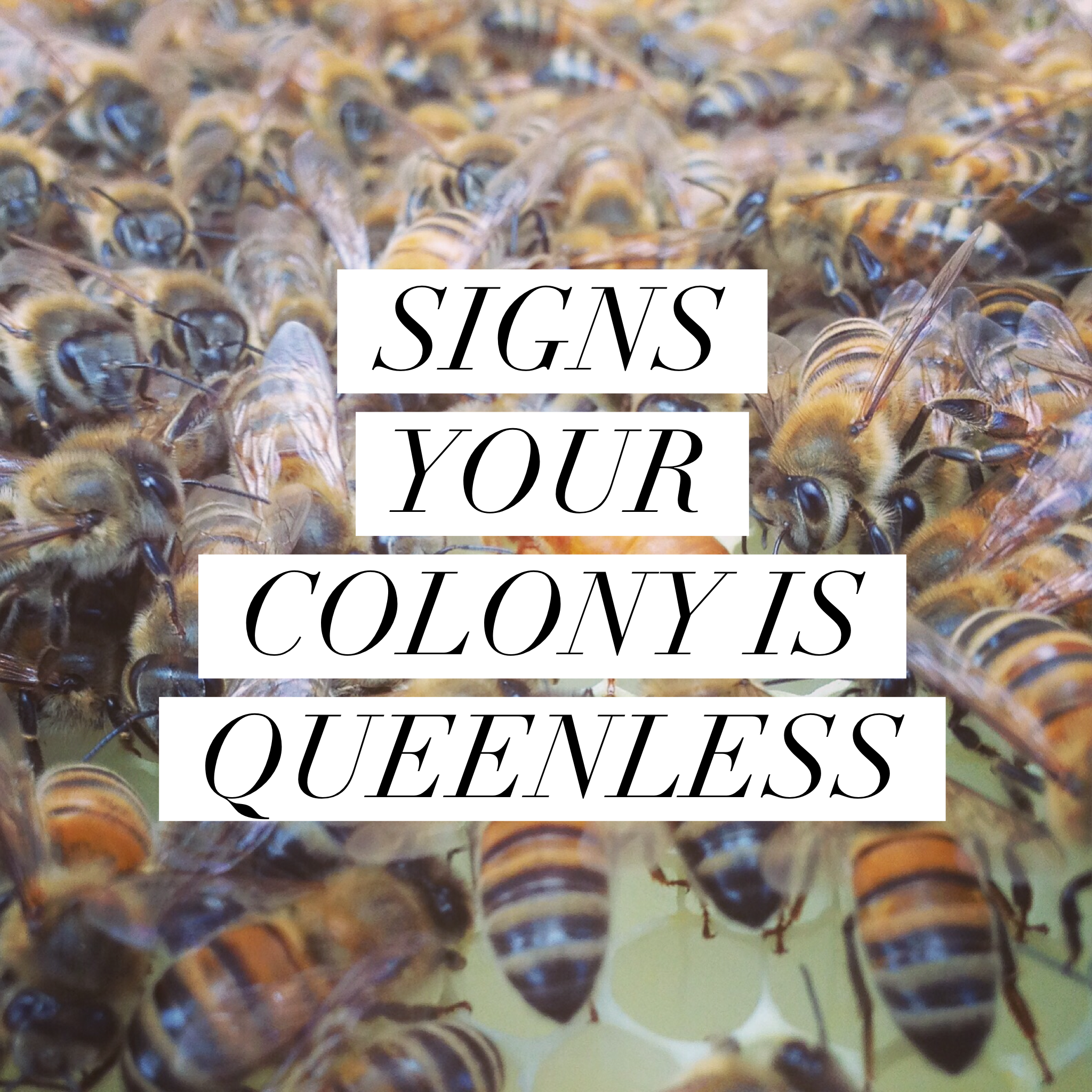 f494d5fc89 Beekeeping Like A Girl SIGNS YOUR COLONY IS QUEENLESS